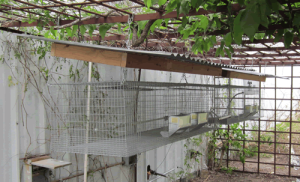 Rabbit Cages With Roof