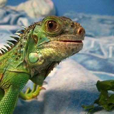Reptiles As Survival Food