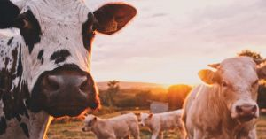 E263: How to Make Cows Pay for a Bug Out Location